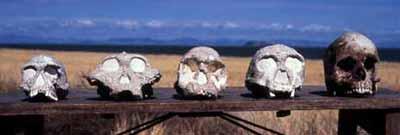 ancestral-skulls