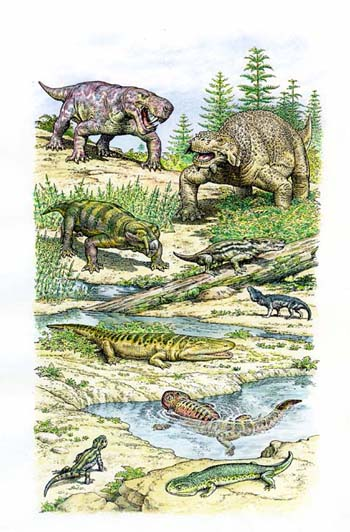 Later Permian Fauna from Russia
