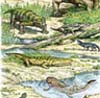 Late Permian Fauna from Russia100