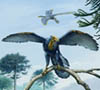Perching Archaeopteryx Scene