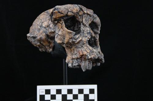 sahelanthropus
