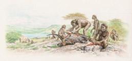 Homo habilis Olduvai