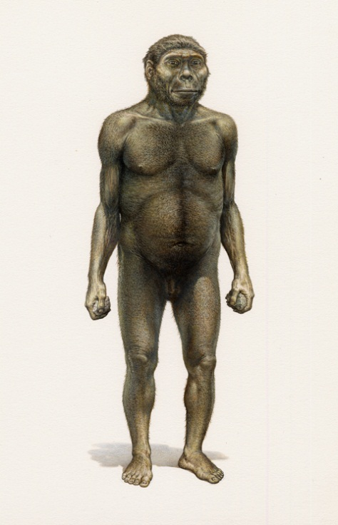 Homo habilis male