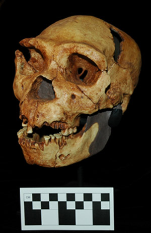 Sima Skull