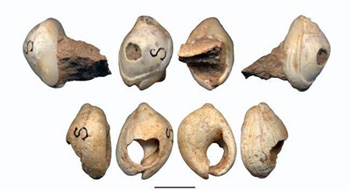 100,000 year old shell beads